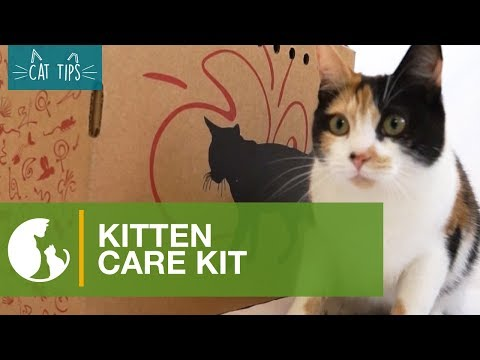Cat Tips:  Kitten Care Kit