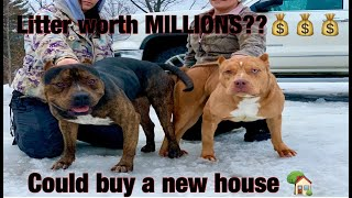 THE HULK LIFE: LITTER WORTH MILLIONS!  SQUAD OUT