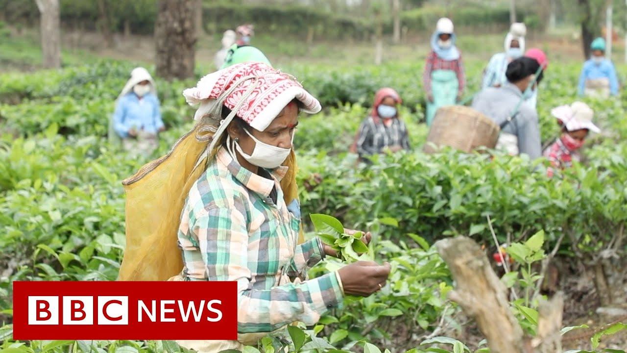 Coronavirus: The fears of India's tea workers in lockdown - BBC News