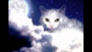 Коты - воители.Путь в звёздное племя.