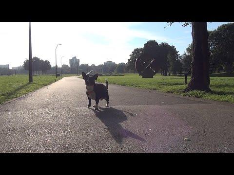 Snoopet 60 - Shoreditch Park