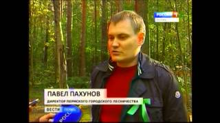 День лесника: в Перми поздравили героев лесного дела