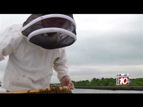 RIT on TV: Drones to Replace Pollinating Bees?