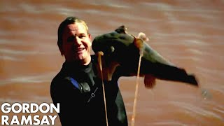 Download Catching Wild Catfish By Hand in Oklahoma - Gordon Ramsay Mp3 and Videos