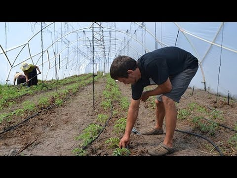 From home gardener to organic farmer