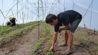 From home gardener to organic farmer