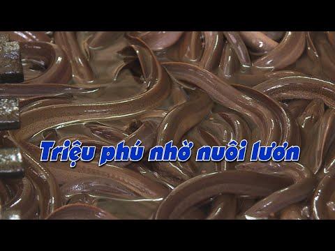 Nhiều hộ dân trở thành triệu phú nhờ nuôi lươn | Many households became millionaires by raising eels