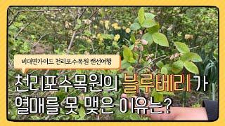[비대면가이드] #1-4 천리포수목원   태안 만리포 …