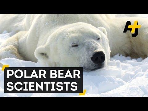 Melting Sea Ice Threatens Polar Bears