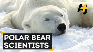 Baixar Melting Sea Ice Threatens Polar Bears