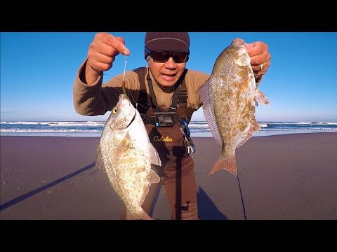 Catch And Cook Surf Perch.  Oregon Surf Fishing