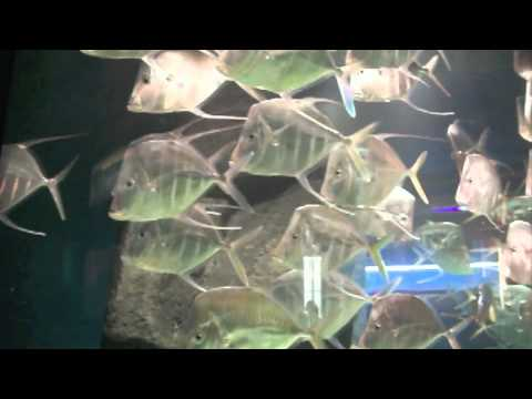 Children's Aquarium at Fair Park Dallas - YouTube