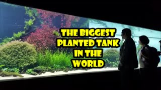 99 - My visit to see the biggest planted tank in the world - Florestas submersas by Takashi amano