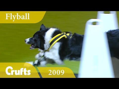 Flyball - Team Finals 2009   Crufts Dog Show