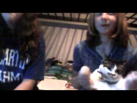 courntey and caitlin california cats