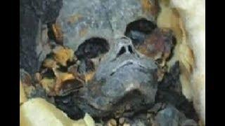 Археологи не ожидали увидеть такое в гр об нице фараона. Самая большая тайна Турина.  Док. фильм.