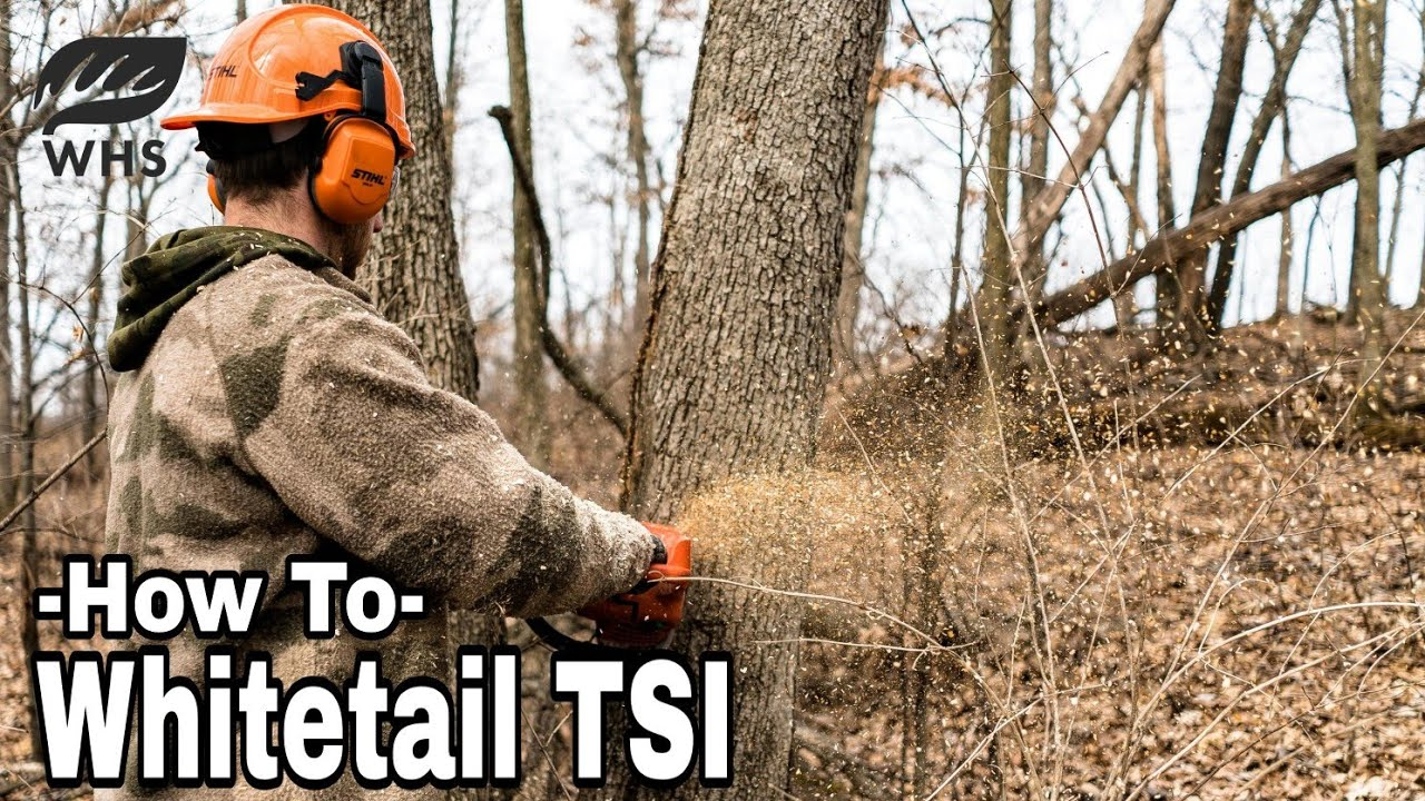 How To Manage Timber For Wildlife TSI