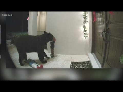 WIOD-AM Local News - VIDEO: Black Bear Caught On Doorbell Camera In Naples