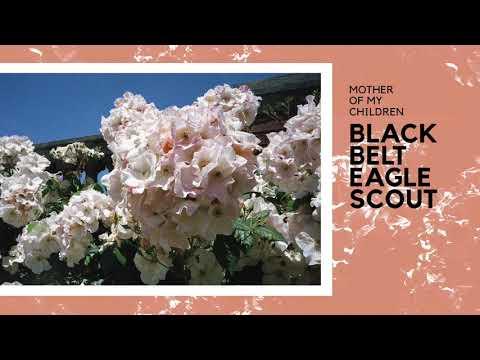Black Belt Eagle Scout - Soft Stud