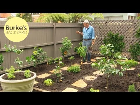 Burke's Backyard, Dwarf Fruit Tree Makeover