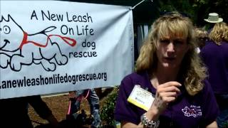 a new leash on life dog rescue   dog adoption   raleigh nc