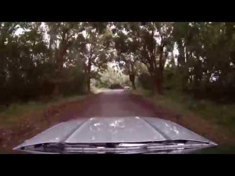 Hawaii - Driving Big Island - Puna District - Tree Tunnel