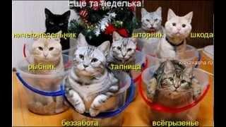 Новогодние супер приколы. Фото шоу от http://kiskavasha.ru