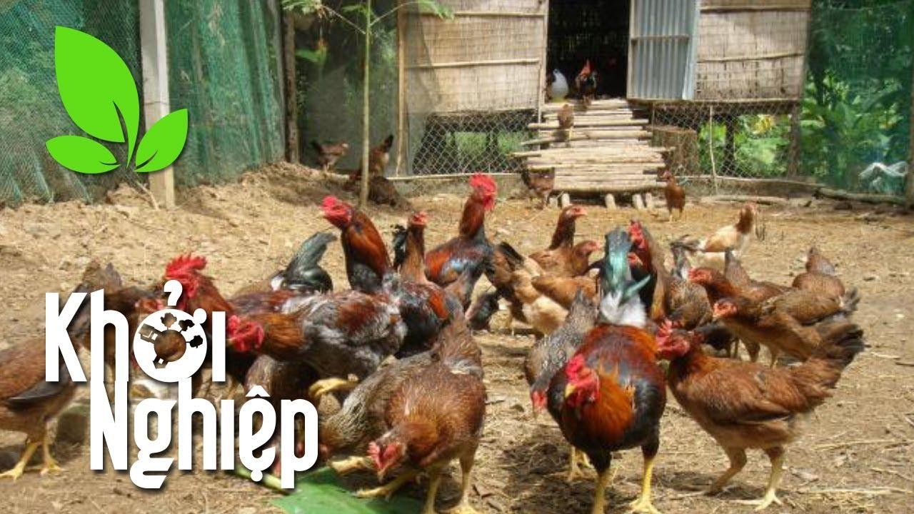 """""""Lột xác"""" chuồng nuôi gà: Không có việc gì khó, chỉ sợ lòng không bền – Khởi nghiệp 394"""
