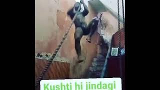 Bhura pahalwan Dholpur new short vedio 🤼♂️🤼♂️💪💪