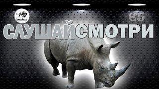Завораживающая МУЗЫКА 2020 🎼 КРАСИВЫЙ клип о  ЗАГАДОЧНЫХ животных 🐗 № 65