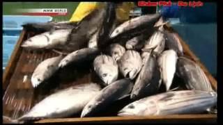 [Khám phá Nhật Bản] Văn hóa ẩm thực cá Ngừ