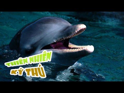 Cá Heo Tấn Công Người - Dolphin attack