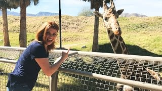 Explore The Living Desert Zoo And Gardens In Palm Desert, CA | Chill Chaser