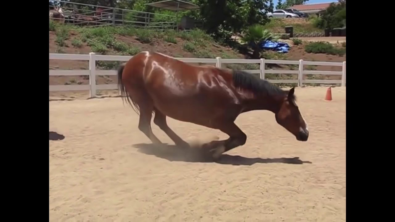 I don't know about the rest of you but I certainly know ...  |Funny Horse Farts