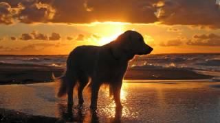 Mike Mikhijan - Clifton Beach (Original Mix)