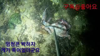 #해루질 #소라 #바다 #스킨 #정글의법칙 #비오는날 #가물치 #용삼형제 #민물타이거 #위너카 #밤바다 #남…