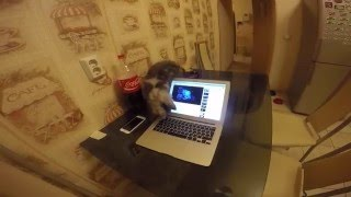Мейн кун Шэри. Монтаж видео на Mac Book Air. Как он это делает? )))