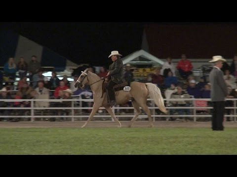 Missouri Fox Trotter Open 4 Years Old WGC Ava 2014