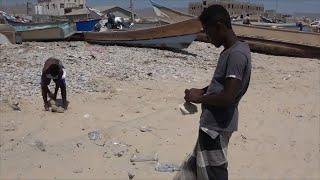 بسبب الصيد العشوائي.. الجمبري ثروة مهددة بالانقراض في مديرية سيحوت بالمهرة