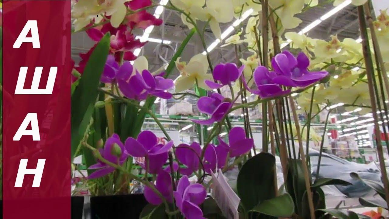 Розы, цветы в магазине ашана отзывы