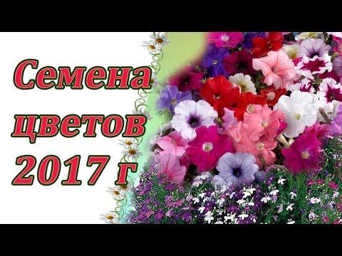 видео: Семена цветов на 2017 год. ОБЗОР .