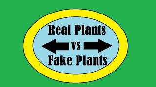 Pros And Cons Of: Real Aquarium Plants Vs Fake Aquarium Plants