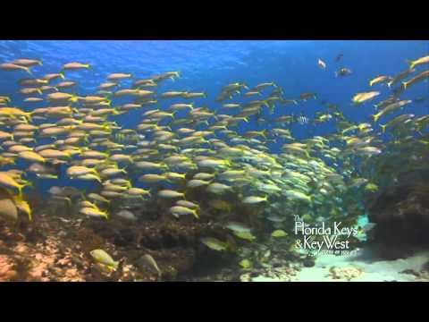 Dive The Florida Keys, Snapper Ledge, Key Largo, Tavernier HD