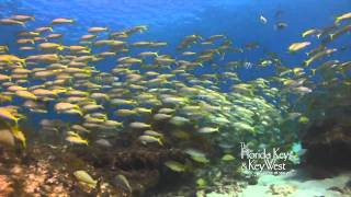 Dive The Florida Keys, Snapper Ledge, Key Largo, Tavernier HD