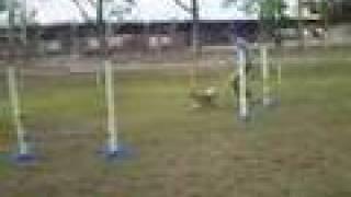 Deer Bush Dog Training Club Agility Trial 20/4/08