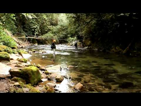 Parque Estadual Turístico do Alto Ribeira - Petar