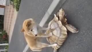 Nafrat Ki Duniya Ko CHOR KE DOG AND KACHHUA