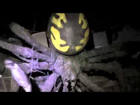 2012 Trail of Terror Walk-Thru video-Wallingford CT