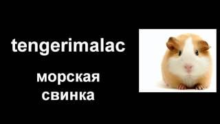 Венгерский язык - домашние животные