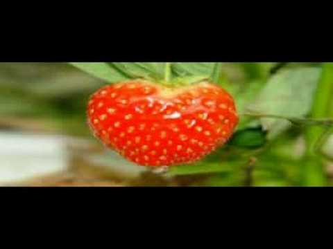 aardbeienhof lied